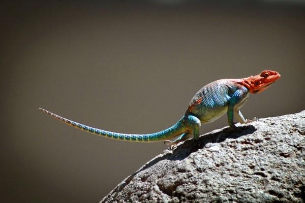Рептилия-спайдермен